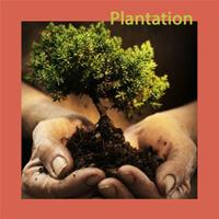 4 nouveaux arbres offerts par Perthois Sport Nature